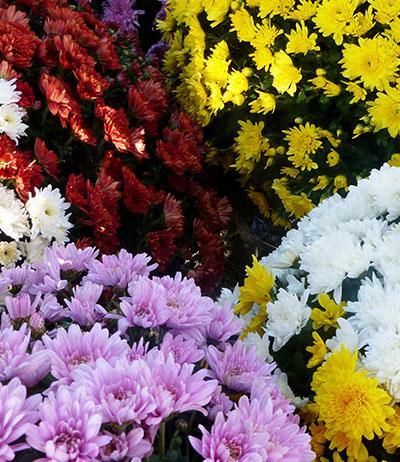alth a fleuriste en gros grossiste en fleurs coup es et plantes en rh ne alpes. Black Bedroom Furniture Sets. Home Design Ideas