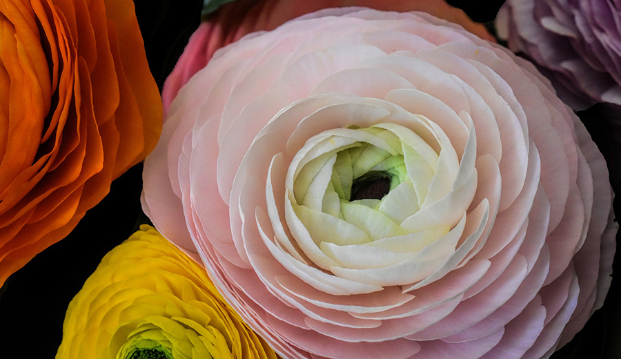 https://cqc5187.phpnet.org/wp-content/uploads/2017/10/flower-1345337_1920.jpg